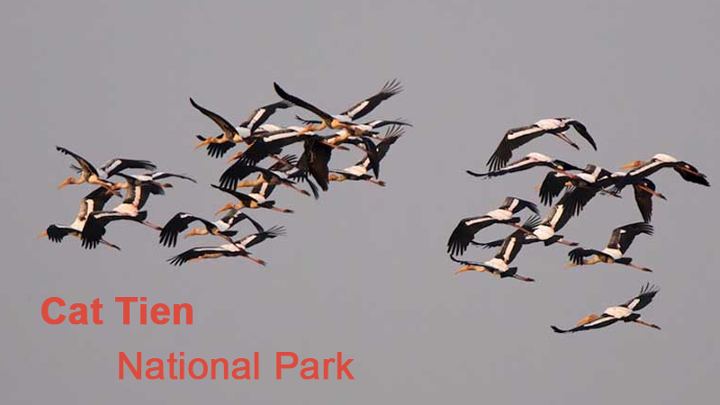 Birding hide for rent - Cat Tien National Park